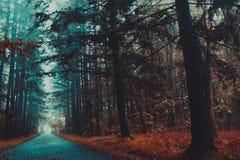 Düsterer Herbstwald, Krise, verlässt Stockbild