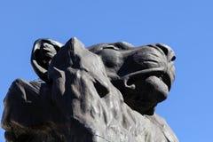 Düsterer Löwe Stockfoto