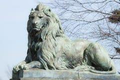 Düsterer Löwe Stockbilder