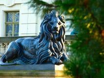 Düsterer Löwe lizenzfreies stockbild