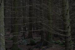 Düsterer Wald Stockfoto