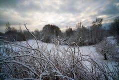 Düsteres Wetter im Winterwald Stockfotos