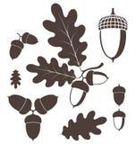 dąb acorn ilustracji