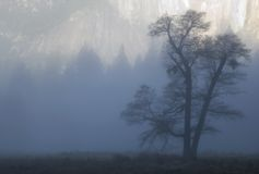 dąb mgły Zdjęcia Royalty Free