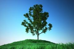 Dąb na trawy wzgórzu Zdjęcia Royalty Free
