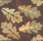 Dąb opuszcza jesień wzór Obraz Stock