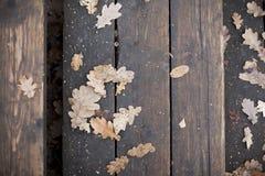 Dębów liście na deskach Obraz Royalty Free