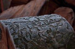 Dębowa drzewna barkentyna marznąca z liniami Obrazy Royalty Free