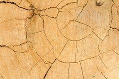 Dębowa drzewna rżnięta drewniana tekstura Zdjęcie Stock