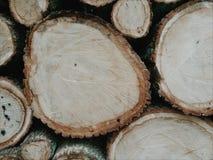 Dębowego drewna sekcja zdjęcia stock