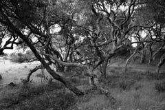 Dębowego drzewa las fotografia stock