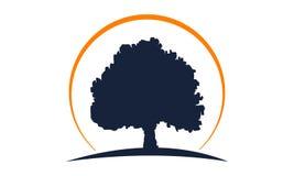 Dębowego drzewa szablon ilustracji