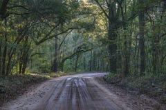 Dębowego drzewa tunel w Lowcountry Charleston Południowa Karolina zdjęcie royalty free