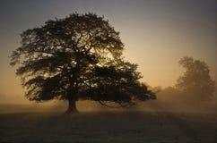 Dębowego drzewa wschód słońca Obrazy Royalty Free