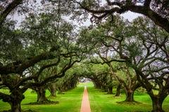 Dębowego drzewa zakrywający baldachim Fotografia Stock