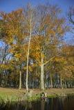 Dębowi drzewa i odbicia w kanale blisko Woerden w Netherlan zdjęcia stock