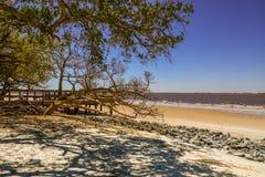 Dębowi drzewa na Złotej wyspie fotografia royalty free