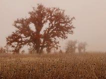 Dębowi drzewa w zimy mgle fotografia royalty free