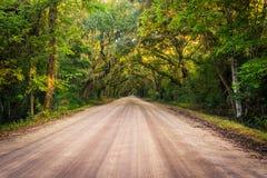 Dębowi drzewa wzdłuż drogi gruntowej botaniki zatoki plantacja na Edisto zdjęcia royalty free