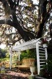 dębowy ławki drzewo Zdjęcia Royalty Free