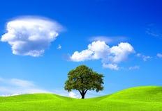 dębowy drzewo Zdjęcie Royalty Free