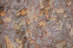 Dębowy drzewo Backround zdjęcia stock