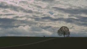 Dębowy drzewo na wzgórze czasu upływie zbiory