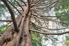 Dębowy drzewo pod dolnym widokiem zdjęcia royalty free