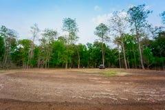 Dębowy drzewo, drzewo, pole, Kultywował ziemię, las zdjęcie stock