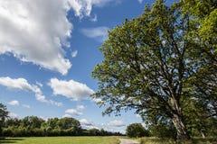 Dębowy drzewo przy łąką Fotografia Royalty Free