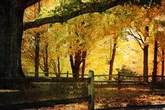 dębowy jesień drzewo obraz stock