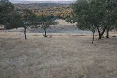 Dębowy las w lecie obraz stock