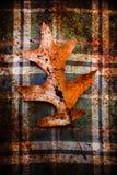 Dębowy liść na jesieni flaneli zdjęcia royalty free