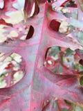 Dębowy liść szczegółowo zdjęcia stock