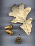 Dębowy liścia przygotowania Zdjęcia Royalty Free