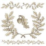 Dębowy wianek i dividers ilustracji