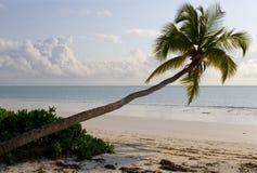 dłonie plażowych Zdjęcia Royalty Free