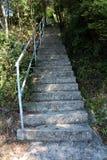 Dłudzy betonowi schodki z metalu poręczem zakrywającym z lasowym porostem Zdjęcia Stock