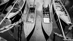 Dłudzy ogony łódkowaci zdjęcia royalty free