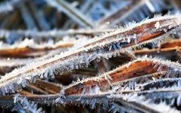 Dłudzy, ostrzy i błyszczący kolce lód, zakrywali trawy w morni Obrazy Stock