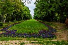 Długa aleja z zielonymi drzewami, trawą i kwitnącymi kwiatami w Cismigiu parku, tulipanów i niezapominajkowych, Bucharest, Rumuni zdjęcia stock