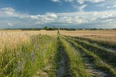 Długa droga z zieloną trawą przez wielkiego pola adra, horiz obraz royalty free