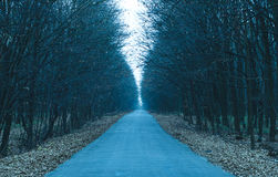 Długa jesieni droga cofa się w odległość obrazy royalty free
