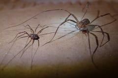Długa noga pajęczaków para zdjęcie stock