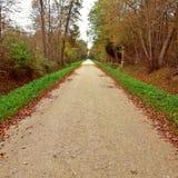 Długa prostej drogi ścieżka w lesie Zdjęcia Royalty Free