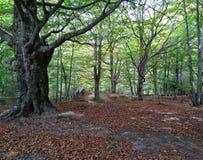 Długa przyjemna ścieżka dla relaksującego spaceru w lesie obraz royalty free