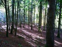 Długa przyjemna ścieżka dla relaksującego spaceru w lesie zdjęcie royalty free