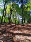 Długa przyjemna ścieżka dla relaksującego spaceru w lesie zdjęcie stock