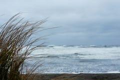 Długa trawa na plaży przed burzowym oceanem Obrazy Stock