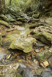 Długa ujawnienie zatoczka z spadać liśćmi biega wśród skał po środku zwartego lasu fotografia royalty free